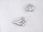 Drawing of shells