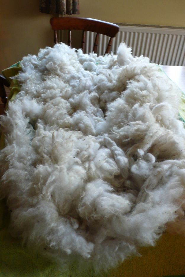 Washed and dried sheep fleece