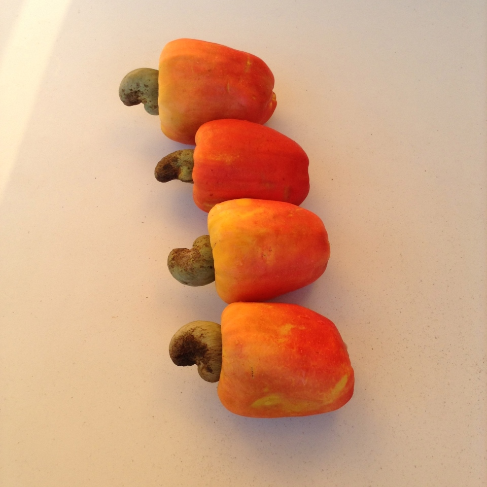 Cashew fruit