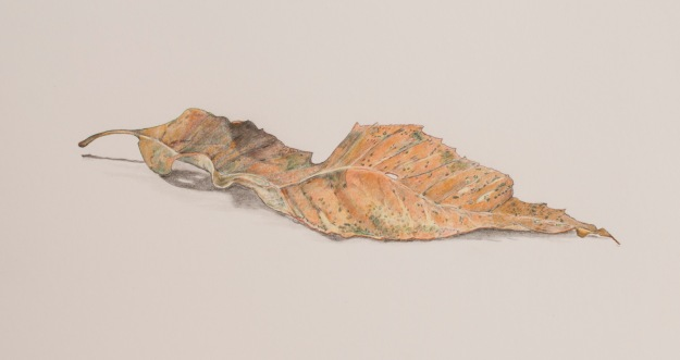 Coloured pencil drawing of a Dead Leaf by Sue Hagley