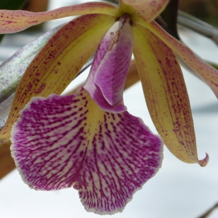 Orchid flower (more details unknown)