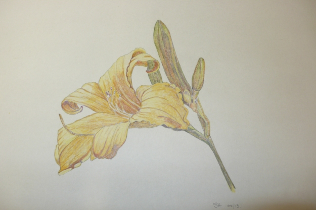 Finished Daylily