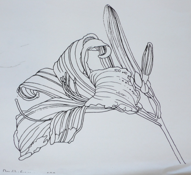 Photocopied line drawing of daylily