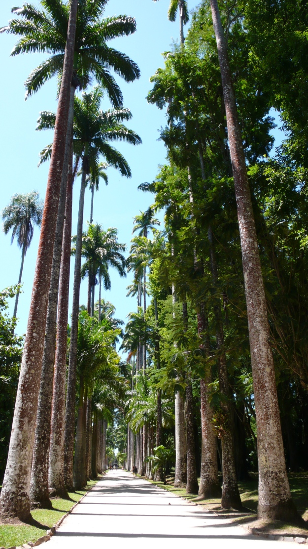Imperial or Royal Palms