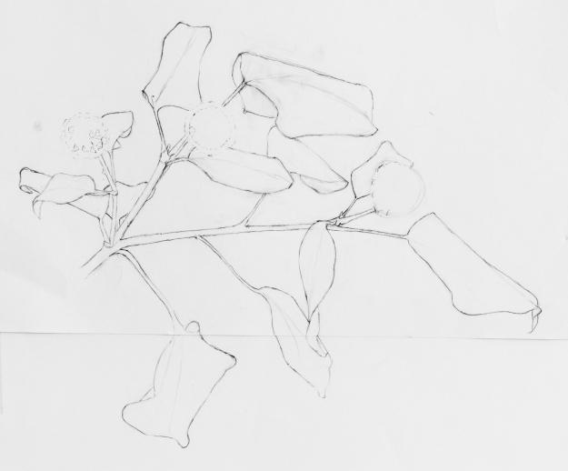 Draft pencil drawing of ivy by Sue Hagley