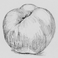 drawing of an apple by Sue Hagley