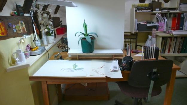Agave plant set up