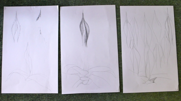 Agave drawings