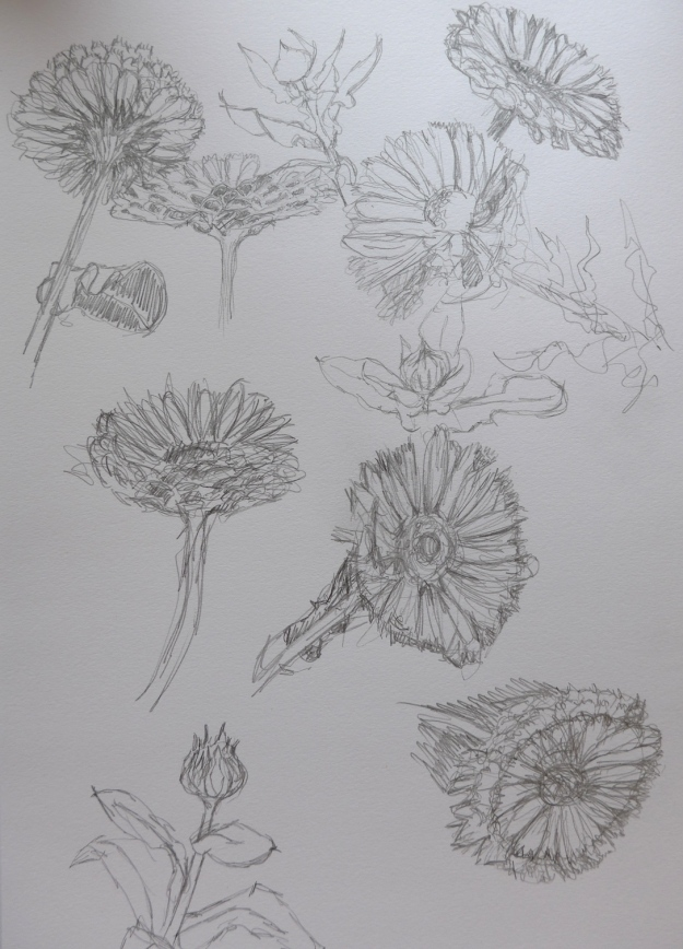 Pencil Marigolds
