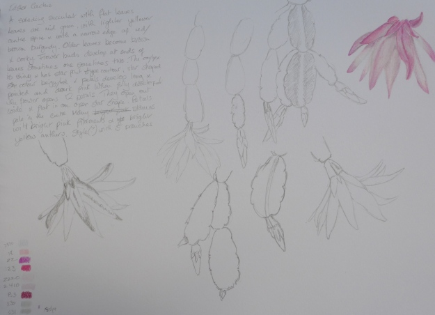 Easter Cactus drawing by Sue Hagley