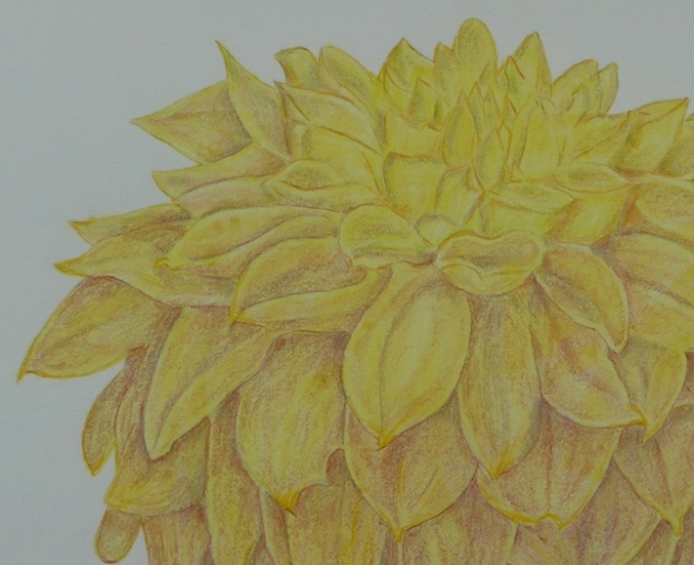 Detail of Dahlia drawing