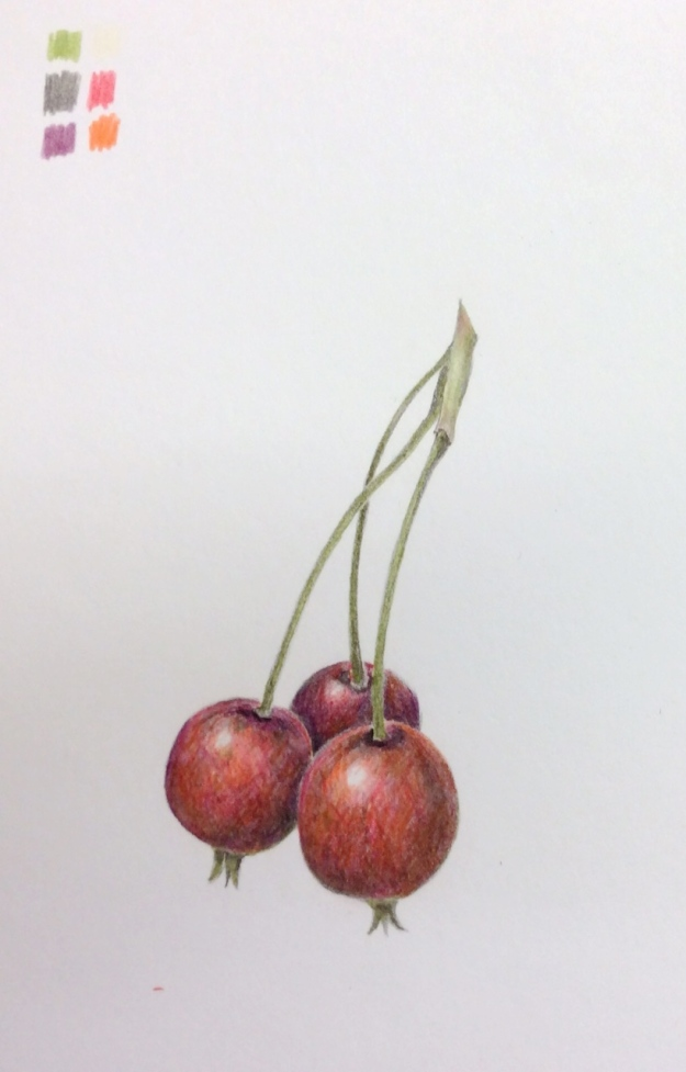 Copy of bunch of crabapples by Wendy Hollender