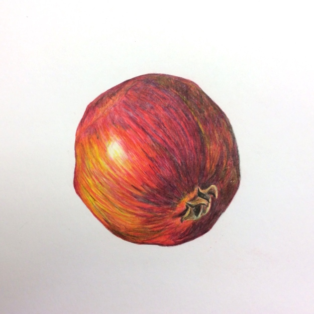 Coloured pencil drawing of a pomegranate by Sue Hagley