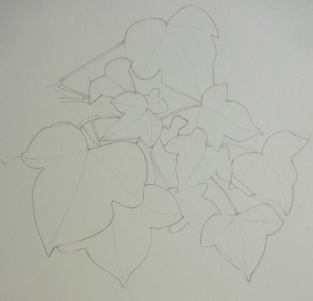 11_365 Ivy