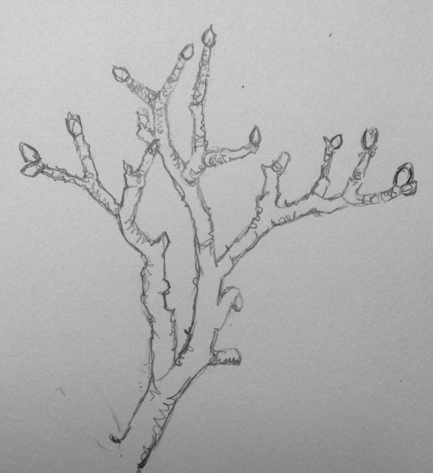 25-365 Twig