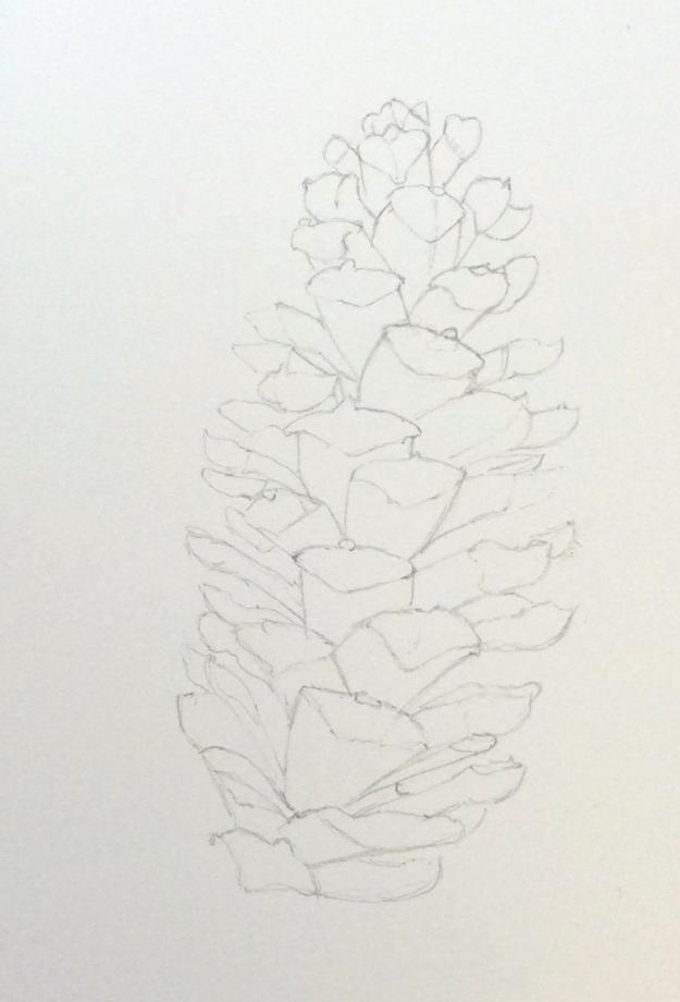 3-365 Pine Cone