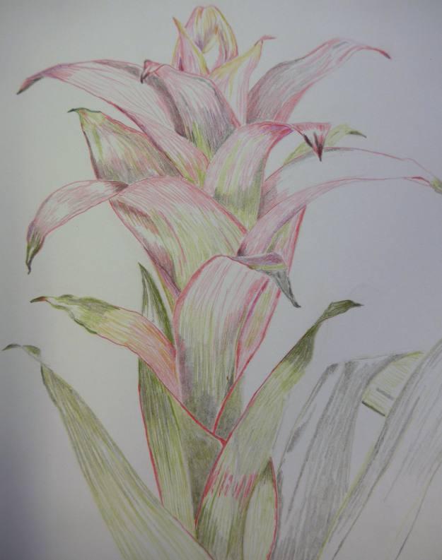Bromeliad in colour