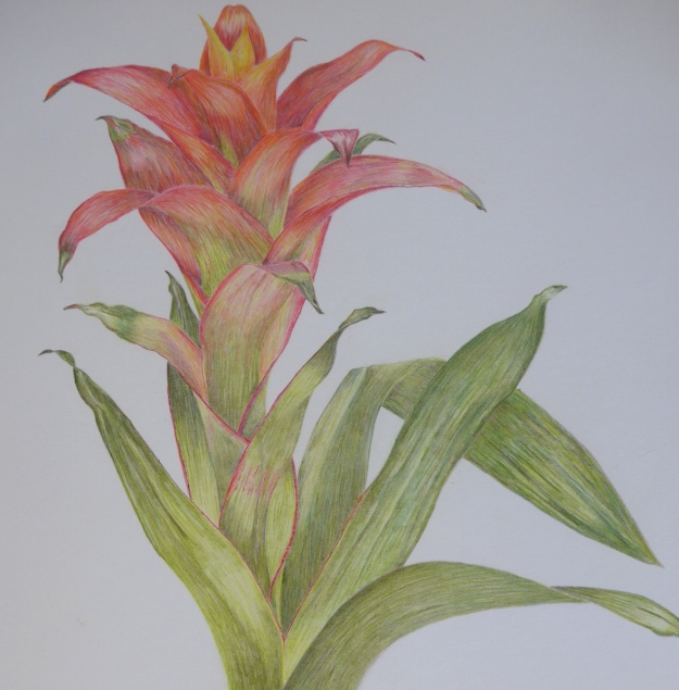 Finished Bromeliad