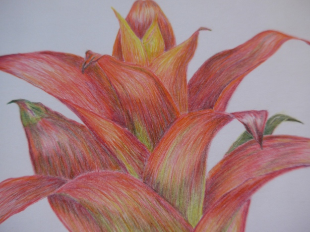Detail of Bromeliad
