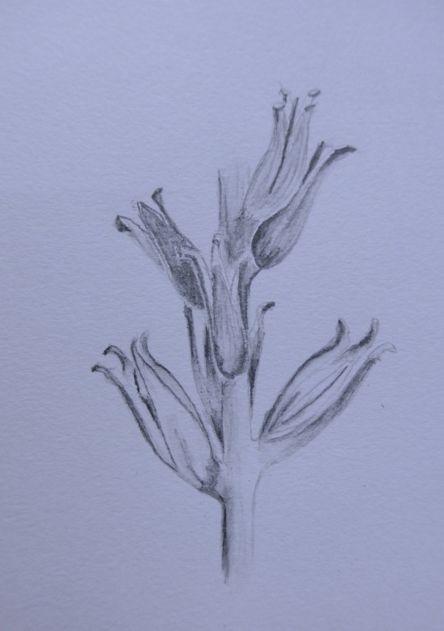 41 Evening primrose seed head