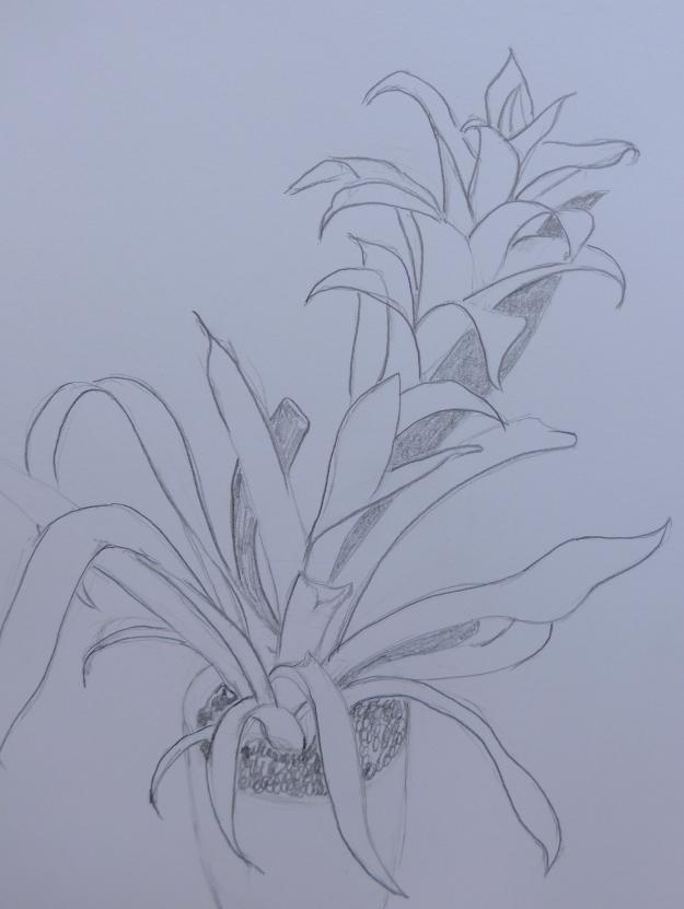 44/365 Bromeliad