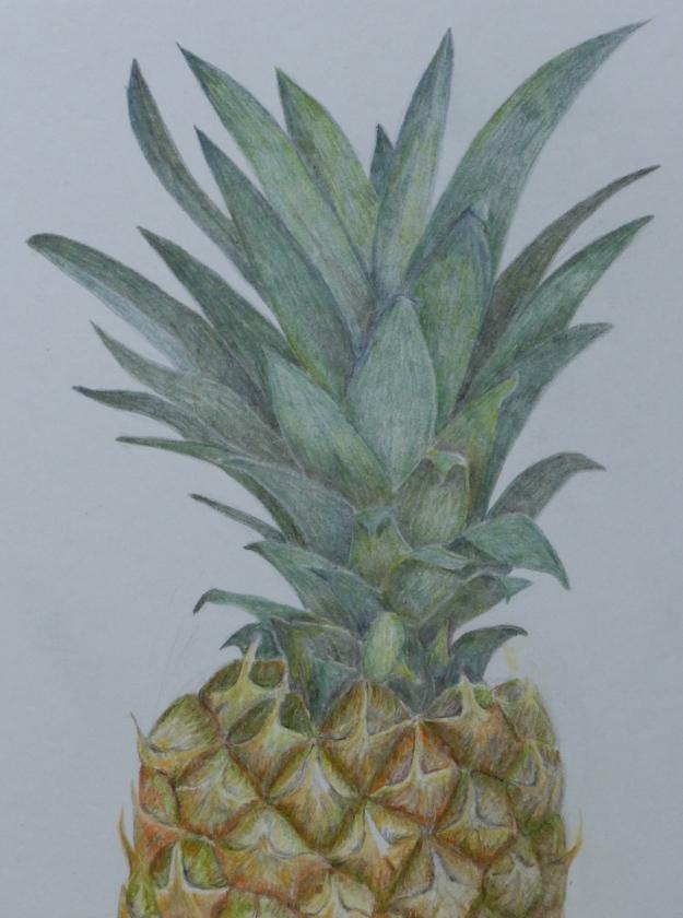 102 Pineapple Leaves