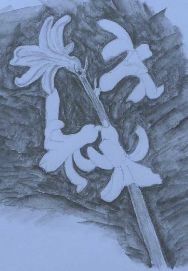 91 Hyacinth