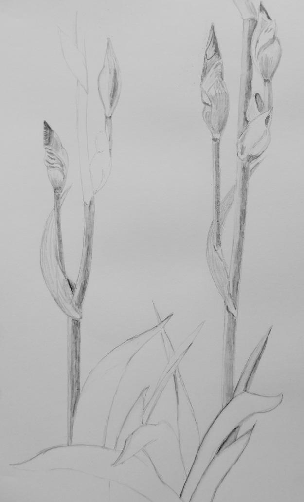 136 Iris