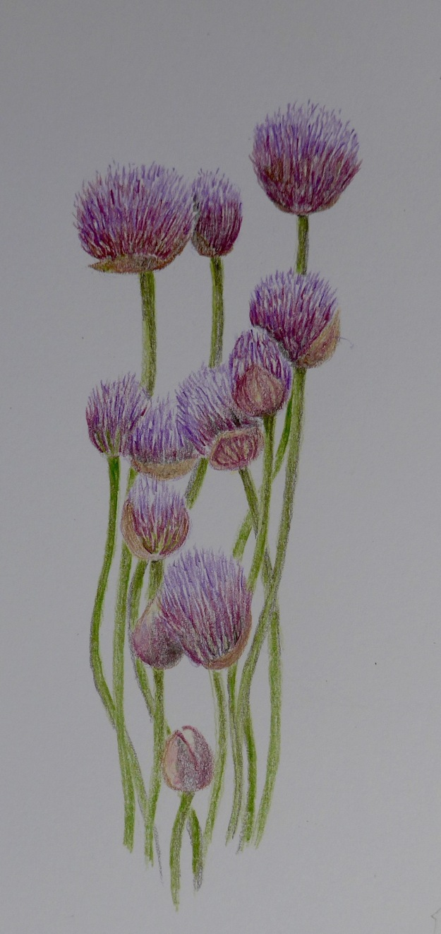 146 Chives