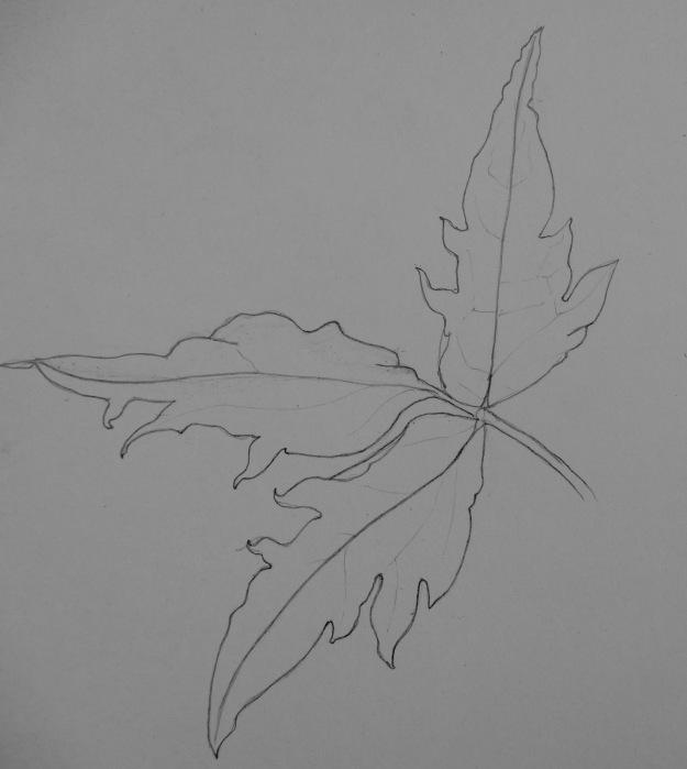 130 Clematis leaf