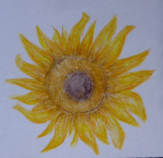 149 Sunflower
