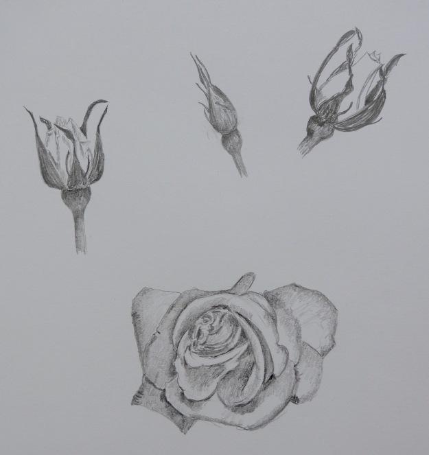 153 Graphite Rose