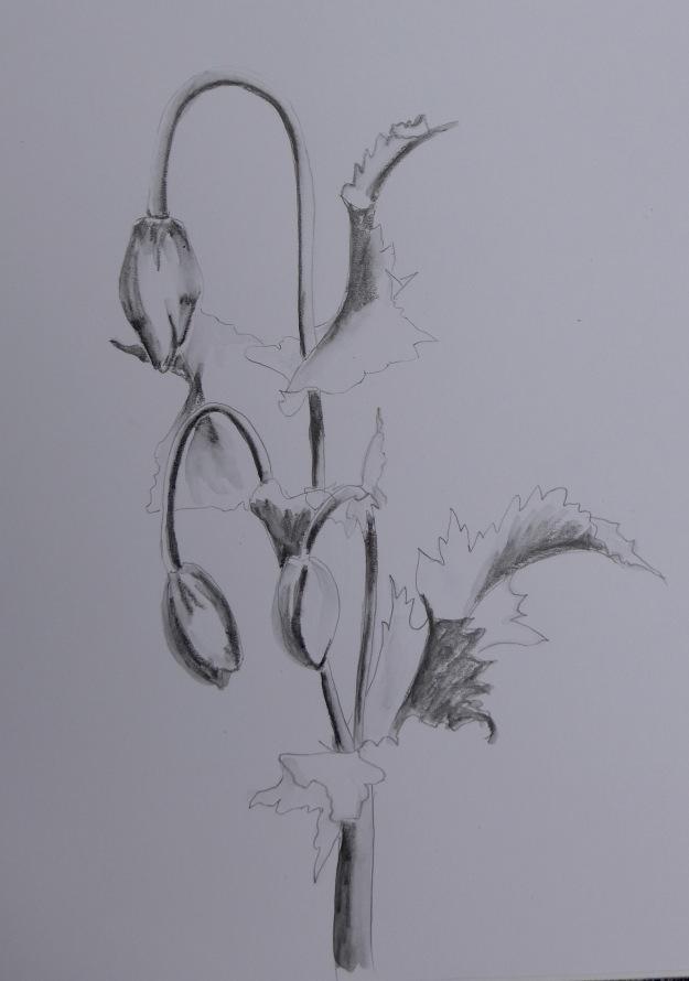 169 Poppy