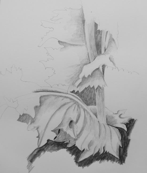 170 Poppy leaves