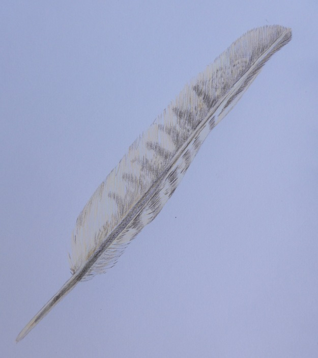 172 Feather