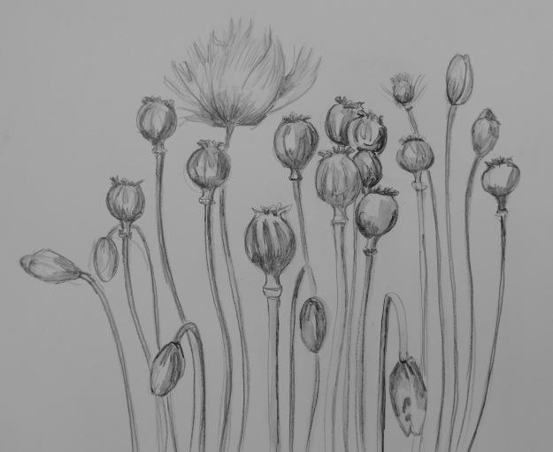 176 Poppies
