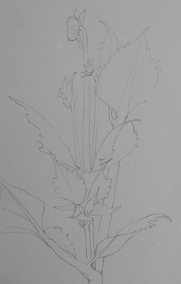 191 Dahlia stem