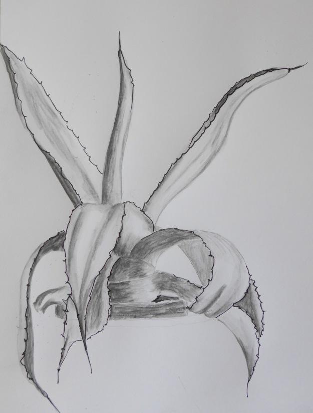 240 Aloe