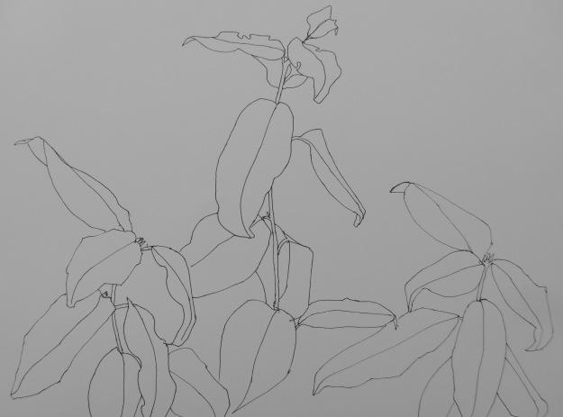 251 Camellia