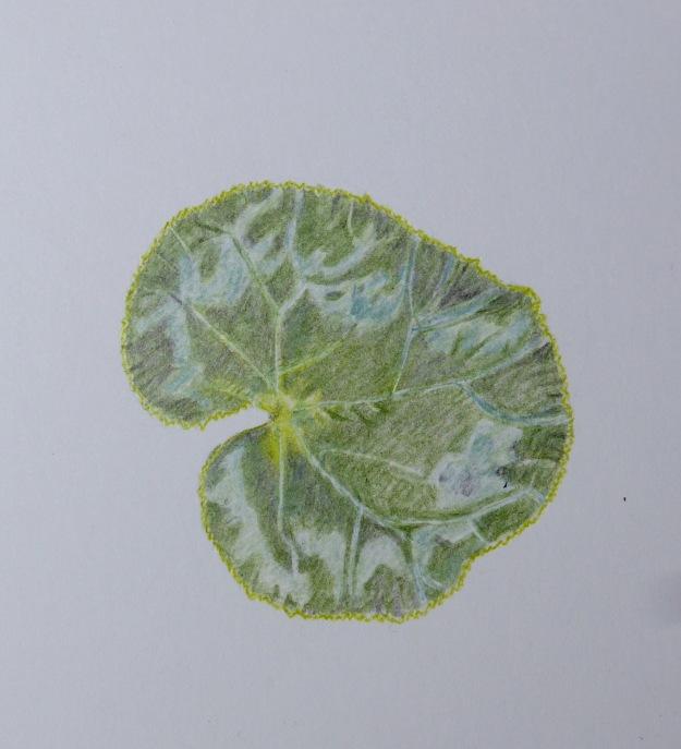 258 Cyclamen Leaf