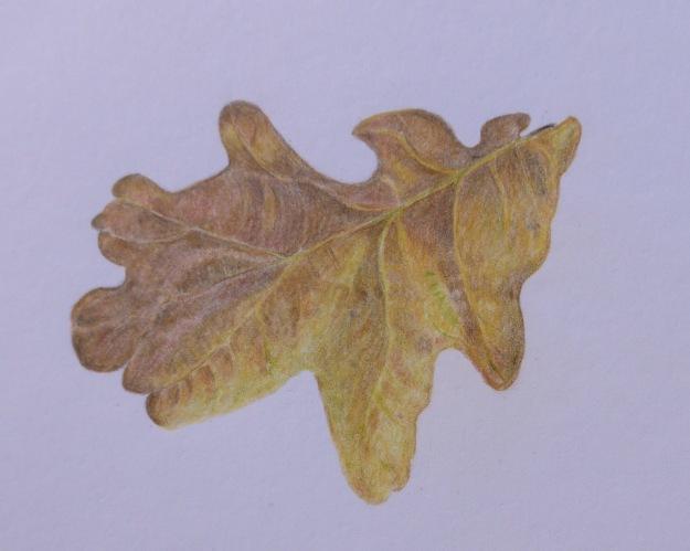 260 Oak Leaf
