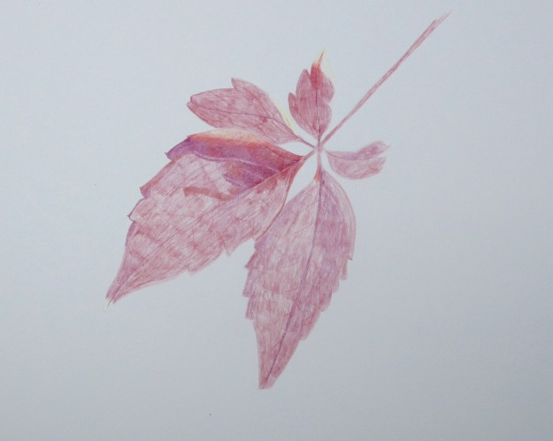 270 Virginia creeper leaf (unfinished)