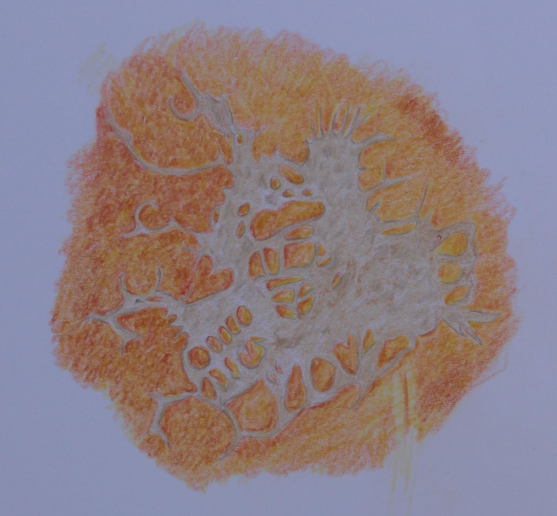 273 Corky skin of pumpkin