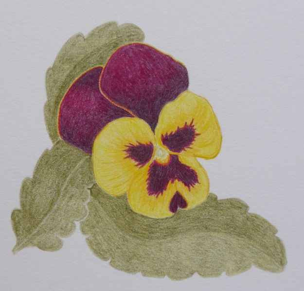277 Yet another Pansy