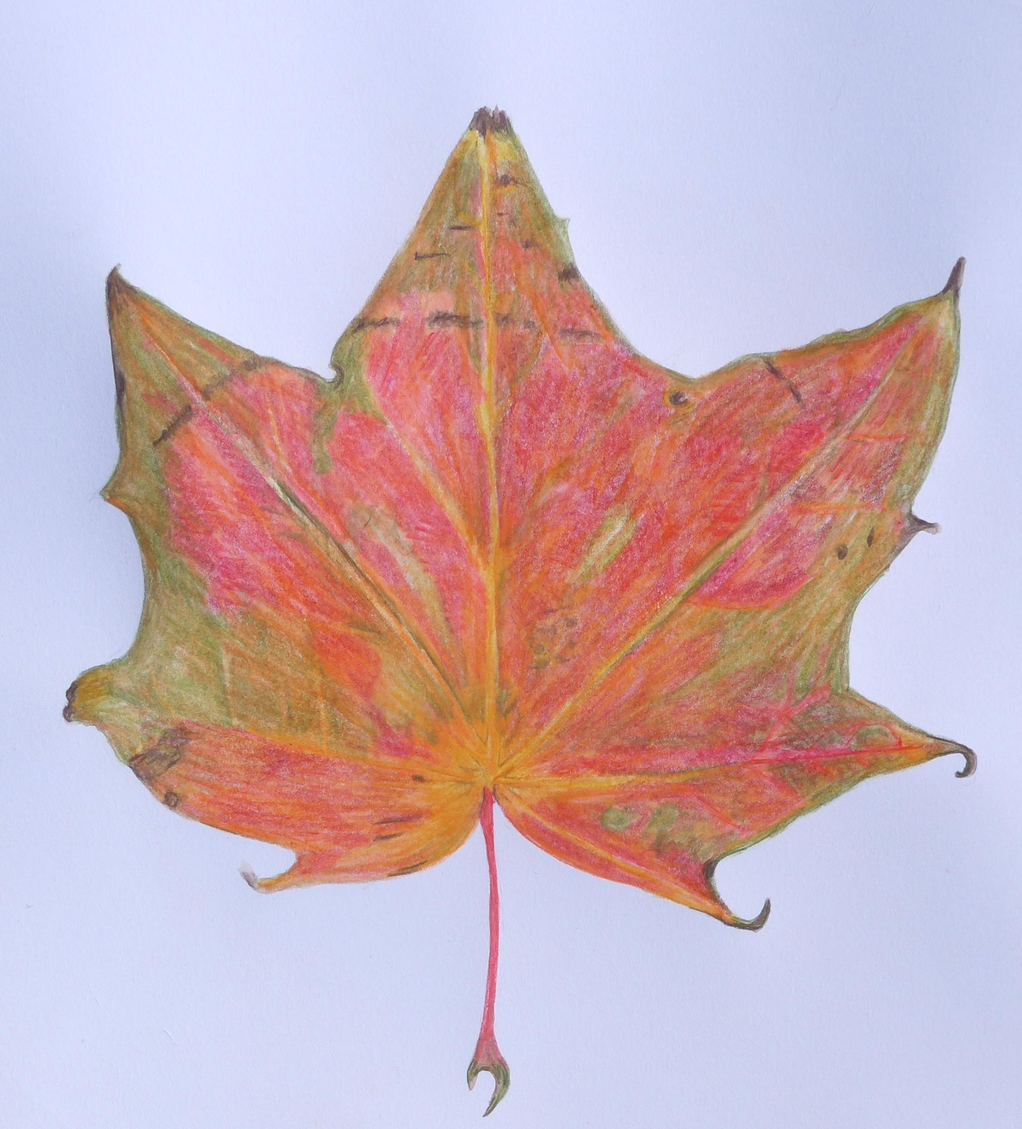 279 Autumn Leaf