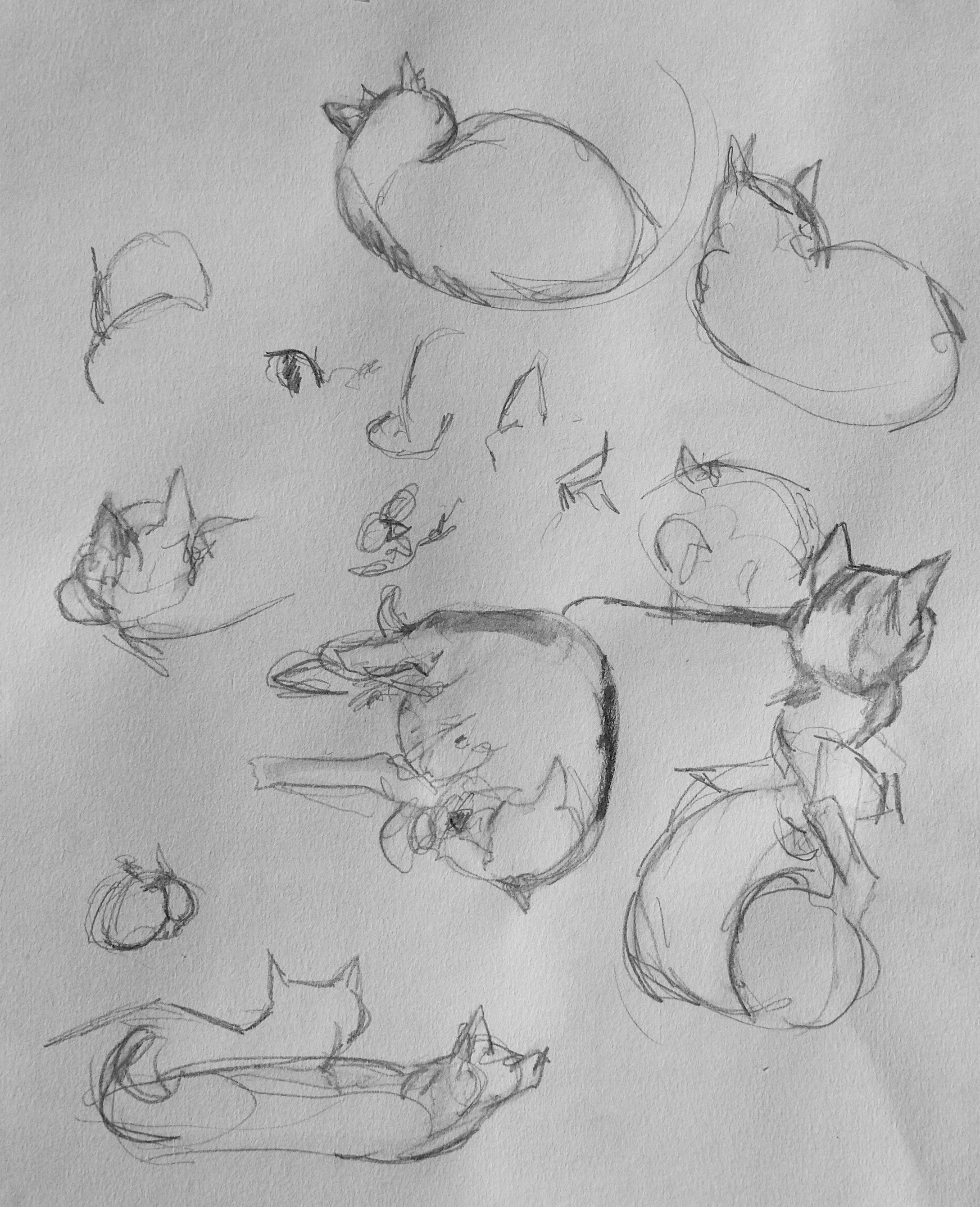 286 Active Cat