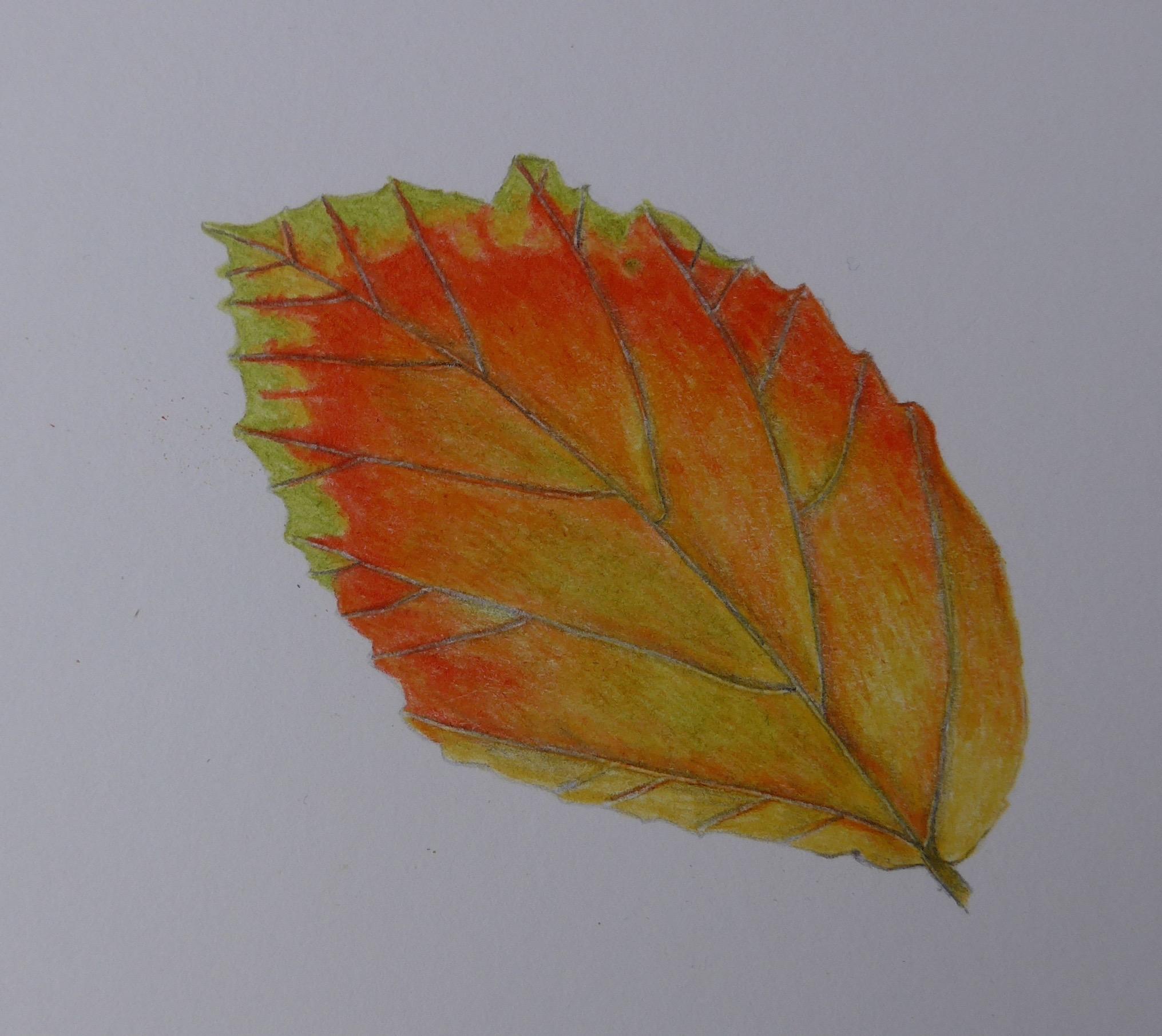 299 Dogwood Leaf