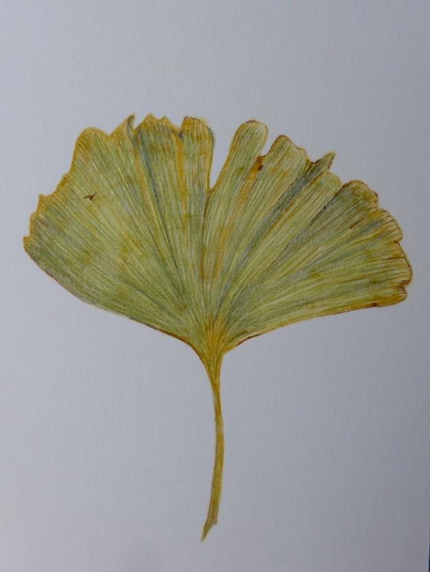 333 Ginko leaf