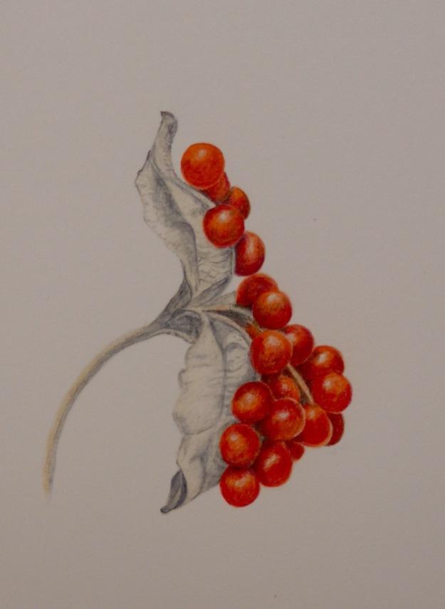 335 Iris berries