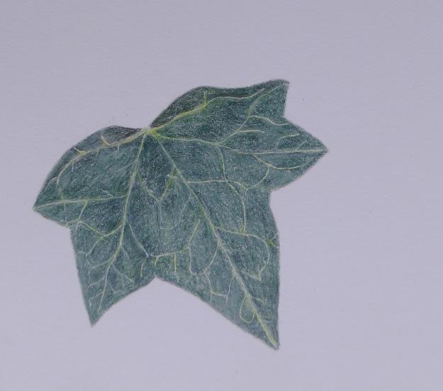 337 Ivy